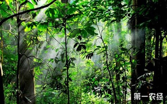 """""""5个结合""""绘制蓝图——2018年云南林业的新愿景"""