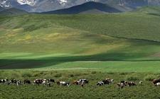 青海:实现低消耗、低污染、高利用 助推农牧业绿色发展