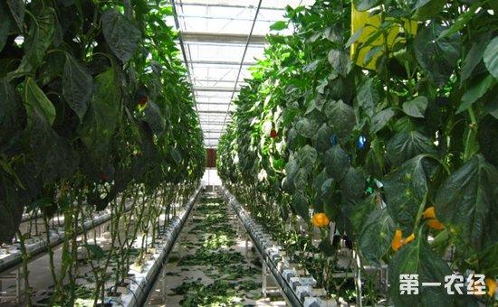 实施乡村振兴战略需要农业科技引领  加大农业科技创新支持力度