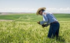 美国:UPI推出一种新型除草剂 有效应对除草剂抗性杂草