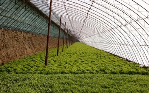 甘肃景泰县利用戈壁荒滩发展新型农业产业