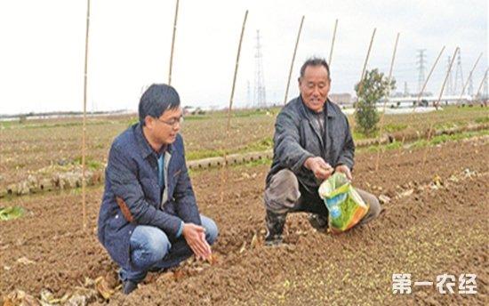 """浙江宁波""""蔬菜之乡""""慈溪长河镇春耕播种忙"""