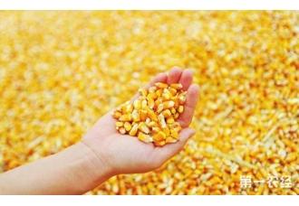 吉林省累计收购新粮288亿公斤 其中248亿公斤为玉米
