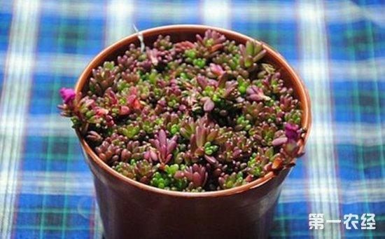 9种常见的普货多肉植物介绍!好看好养且容易爆盆
