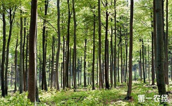 两会声音:大力推进各项林业改革  健全生态文明体制
