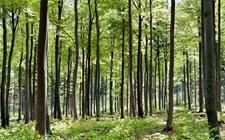 <b>两会声音:大力推进各项林业改革 健全生态文明体制</b>