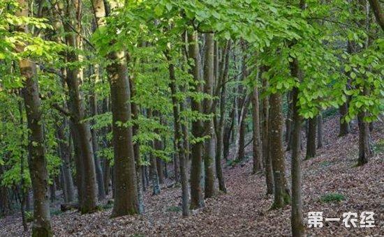 青海:国土绿化提速行动扎实开展  2018年争取林业投资38亿元以上