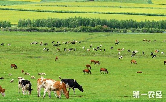 2018年呼和浩特市畜牧业工作会议召开  加快转变畜牧业生产方式