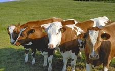 <b>2018年呼和浩特市畜牧业工作会议召开 加快转变畜牧业生产方式</b>