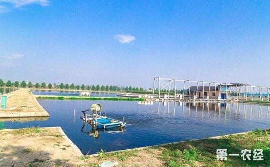 高原单元式循环水产养殖系统研发成功  为水产养殖注入科技力量