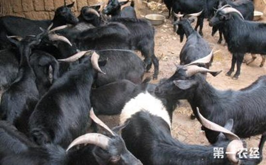 贵州务川:坚持种养结合和草畜配套  促进生态畜牧业转型