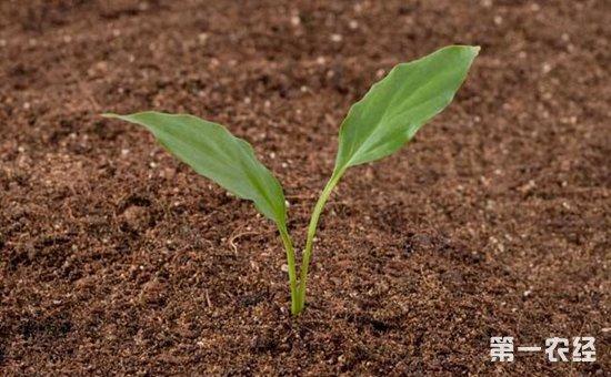 强化土壤污染管控和修复  提高土壤科技支撑能力