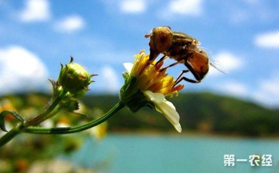 蜜蜂什么时候繁殖快?蜜蜂养殖的繁殖要点