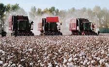 美国:推行棉花生产成本分担计划 以扩大和维持棉花国内市场