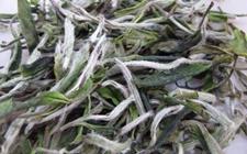 白牡丹茶和贡眉茶有什么区别?白牡丹茶和贡眉茶的区别