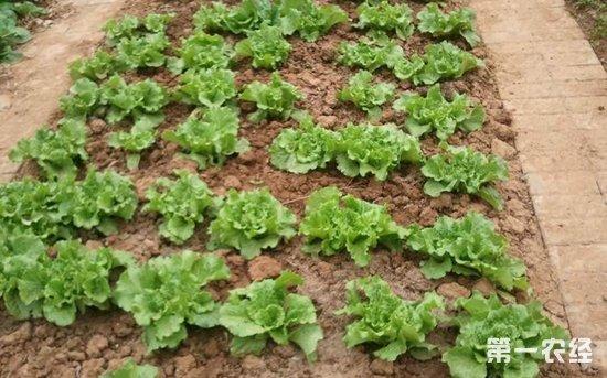 2018年重庆蔬菜产业发展新举措