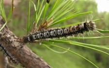 <b>两会声音:全面加强林业有害生物防治 保障林业生态系统安全</b>