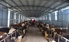辽宁昌图:全面开展畜牧业监测预警工作 推动畜牧业健康有序发展
