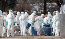 荷兰农场13日再度出现禽流感疫情!目前扑杀3万只家禽 控制疫情中