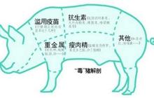 <b>瘦肉精有什么危害?猪饲料中添加瘦肉精的危害?</b>
