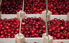 智利3670吨新鲜混装水果首次以联合包船形式发往中国