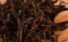 什么是普洱茶的茶皂素?普洱茶的茶皂素是什么?