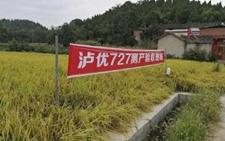 农业部新确认10个2018年超级稻品种