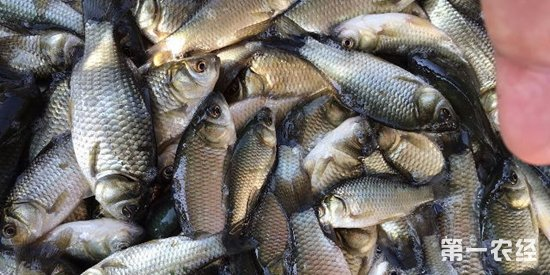 江苏节后水产市场转入交易淡季 特种水产走量减缓价格小幅下降