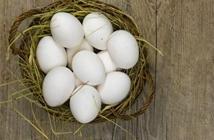 大阪市立大学新技术:利用蛋清制造氢气