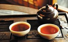 普洱茶樟香是什么香?普洱茶香味介绍