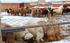 <b>山东:畜牧业呈现稳中有升特点 全面实现畜牧业现代化</b>