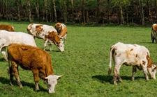 内蒙古:推动农牧业生产由增产导向向提质导向转型
