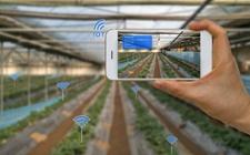 以管理创新推动农业科技创新 为乡村振兴提供经济支撑