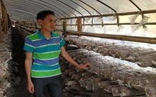 断江镇种养殖大户陈宇平:一位农村致富能手的创业历程