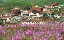 四川理塘县:电子商务在高原藏区激情展开