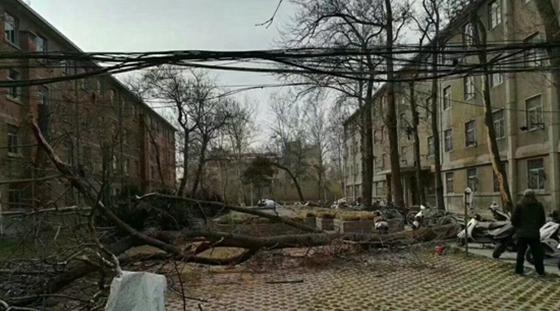 河南昨日遭10级狂风袭击 百米栏杆倒伏大树连根拨起