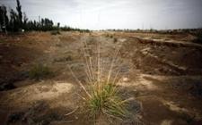 发展西北农业节水灌溉技术 全国政协委员马忠明身体力行