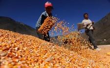 西藏:近年来粮食产量已连续3年超百万吨