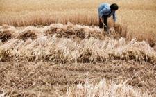安徽:农村承包耕地流转率达45.5%