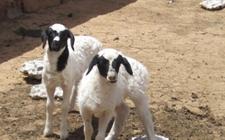<b>湖南:5年内畜牧业产值增加千亿元 加快畜牧业转型升级</b>