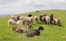 山东滨州:推进畜禽养殖废弃物资源化利用 促畜牧业绿色可持续发展
