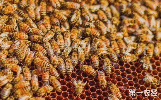 蜜蜂养殖该如何过箱?蜜蜂的过箱条件与过箱方法大全