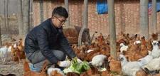 幸福是奋斗出来的——大学生返乡养鸡为梦奋斗