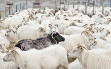 <b>湖北:着力推进畜牧业绿色发展 畜禽养殖废弃物利用率达66%以上</b>