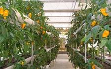 "<b>河南:促进农业科技成果转化 为现代农业发展增添""科技动能""</b>"
