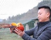养鸡8年开垦荒地成美丽生态农场