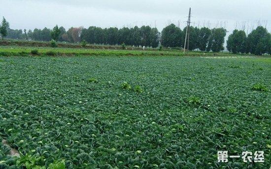 甘肃定西蔬菜产值突破12亿元 2017年蔬菜产量达到90万吨