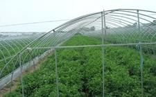 山东聊城:突破传统种植模式 加快蔬菜产业升级