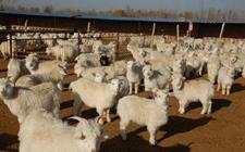 <b>内蒙古包头:以乡村振兴战略为抓手 深化农牧业供给侧改革</b>