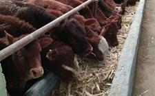 浙江平阳:推进畜牧业增量提质绿色发展 拓展畜牧业发展新空间